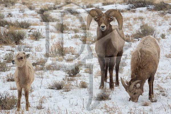 Wyoming 2018