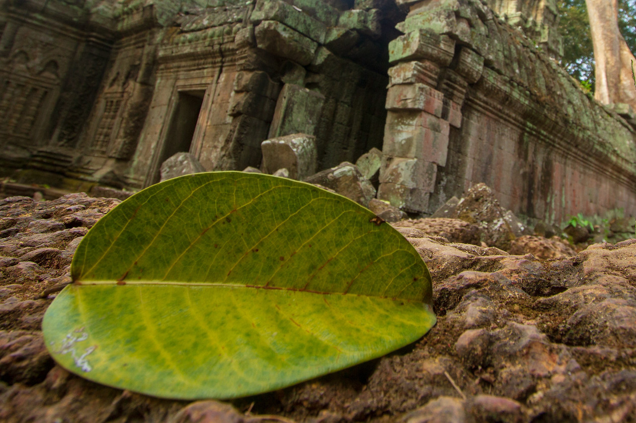 Fallen Leaf at Angkor Wat
