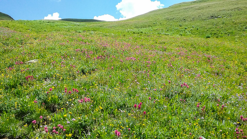 Fields of wildflowers as far up as you can see!