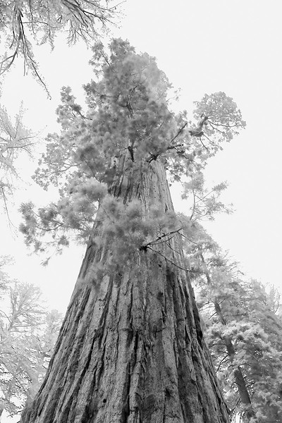 California Day 6 Sequoia 05-30-2017 164.JPG