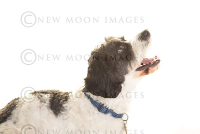 Xmas Dog Photoshoot 14th Dec 2020