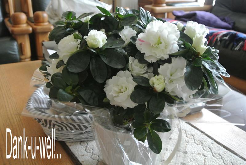Remi, dank-u-wel voor het bloemeke... ge zijt een schat...