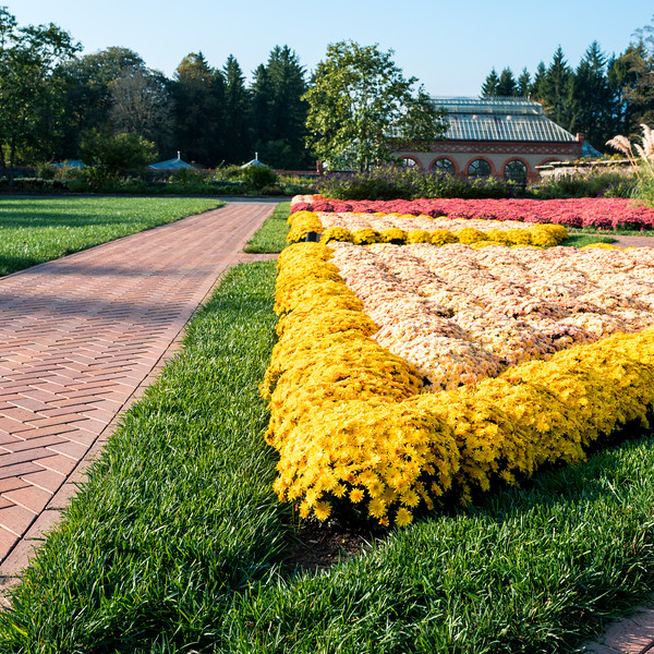 Biltmore Fall Flowers (2 of 3).jpg
