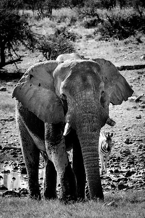 Ch 9 Etosha National Park