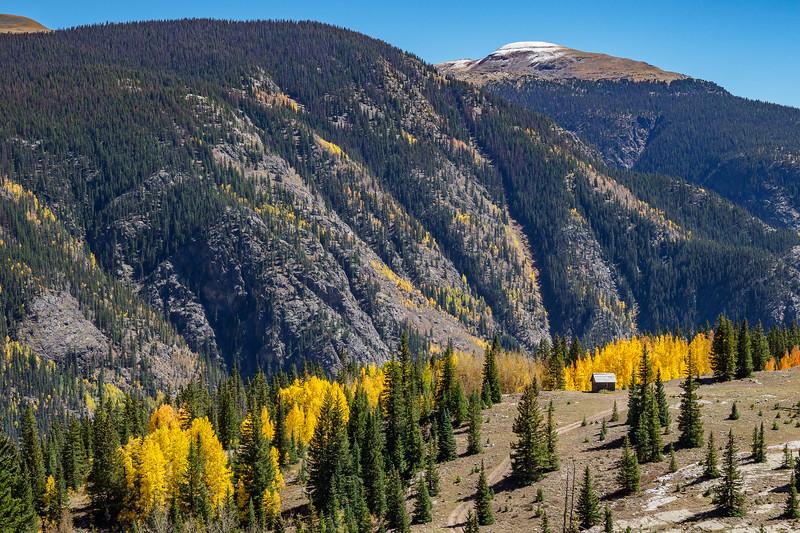 Aspens in the San Juan mountains along Colorado Route 550