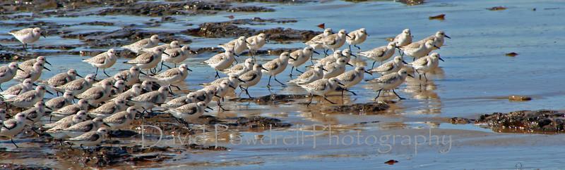 1 Coastal birds.jpg