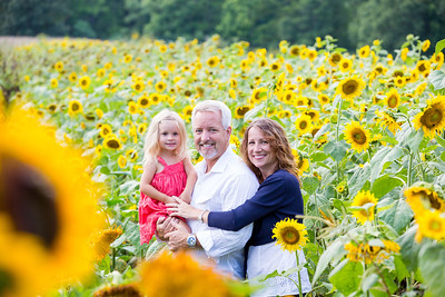 Karen Sunflowers