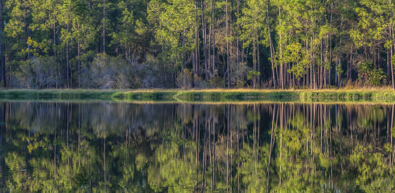 Golden Hour Forest Reflection 1
