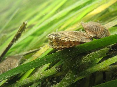 Sea Grass Web Story