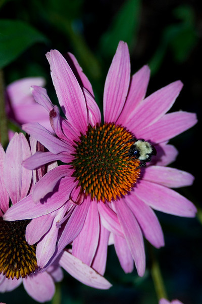 Bee and Flower 2.jpg