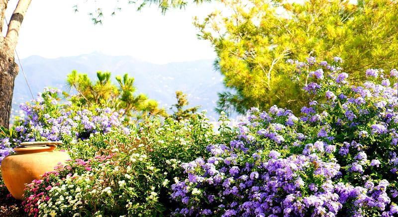 08_19 portofino castle flowers DSC04799.JPG