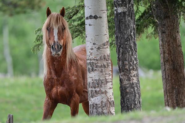 6-7-16 Ab. Wildies - The Stallion - Chance