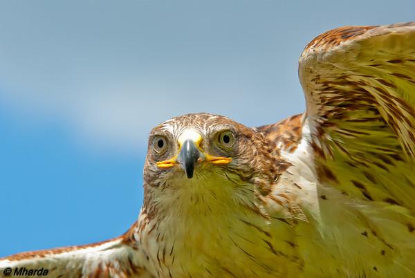 2014 - ZOOM - Collectie Roofvogels