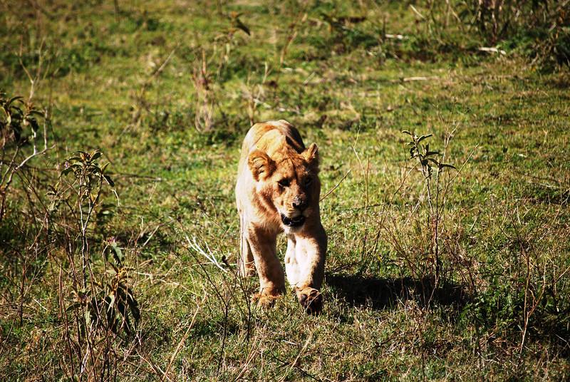Ngorongoro (72).JPG