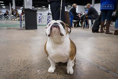 Oaks Dog Show - Dec_08_2018