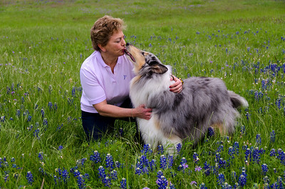 Dog Training & Shows