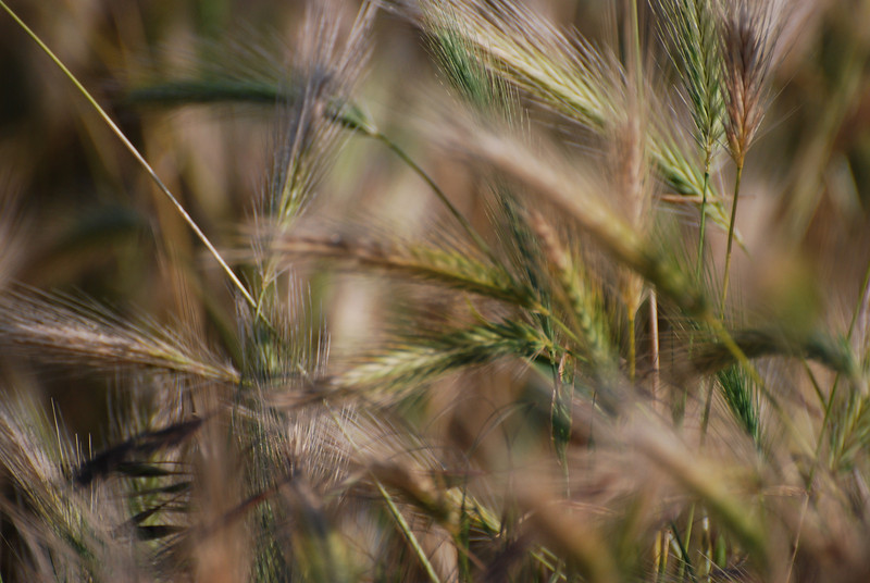 Reeds and Grasses