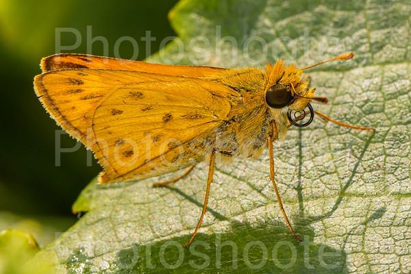 Butterflies Caterpillars Moths