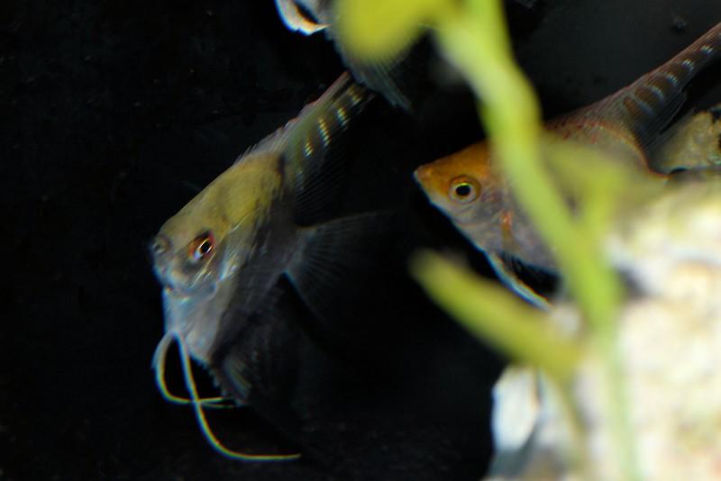 fish (5).jpg