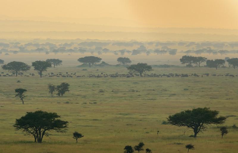 20160214___KET6829_Serengeti_Day_6.jpg