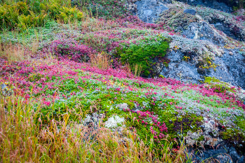 Beautiful blooms in Red Bay, Newfoundland and Labrador, Canada