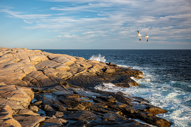 gulls and rocks Peggy's Point.jpg