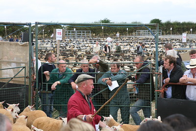 Thame Sheep Fair 2012