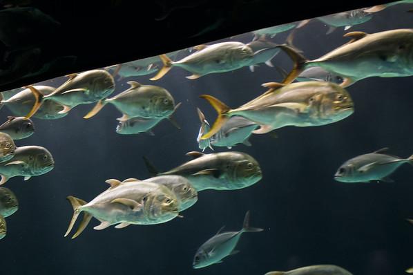 2007-11-17 - Georgia Aquarium