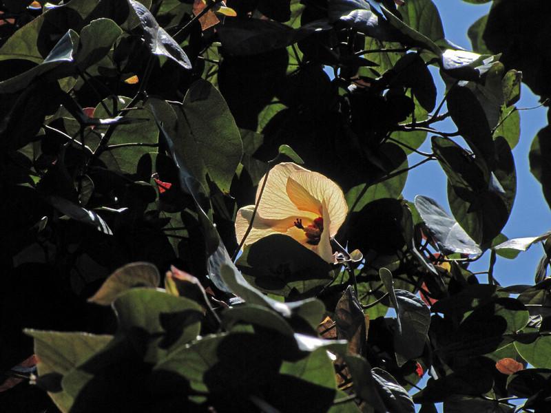 SkyPark tree blossom