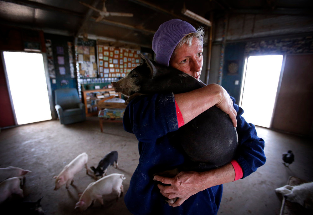 . Farmer Lindy Haynes hugs one of the more than 25 pigs she lives with in her home on her property known as \'Pigsville\' in the New South Wales town of Mudgee, located 250 km (155 miles) west of Sydney March 2, 2013. Haynes believes that all farm animals should be \'free range\', and allows the pigs, chickens, cats and dogs on her farm to move freely in and out of her house, with most sleeping inside at night. Picture taken March 2, 2013.    REUTERS/David Gray