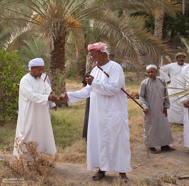 Palm Tree Auction 17- Mudhaibi.jpg