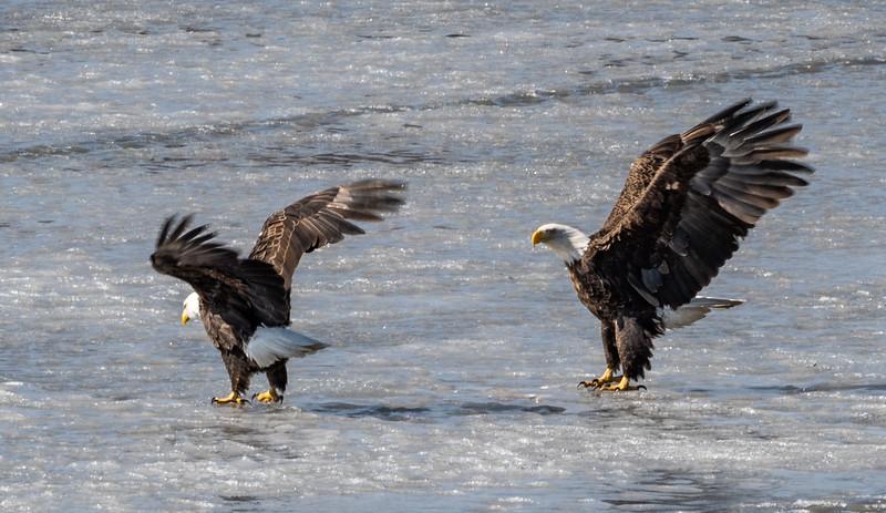 03-17-2020-eagles-3.jpg