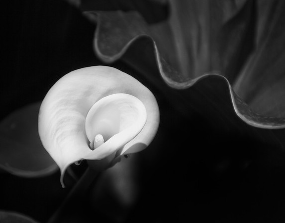 Black and White In The Garden