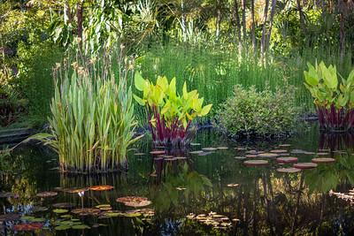 Naples Botanical Gardens - July 5, 2021