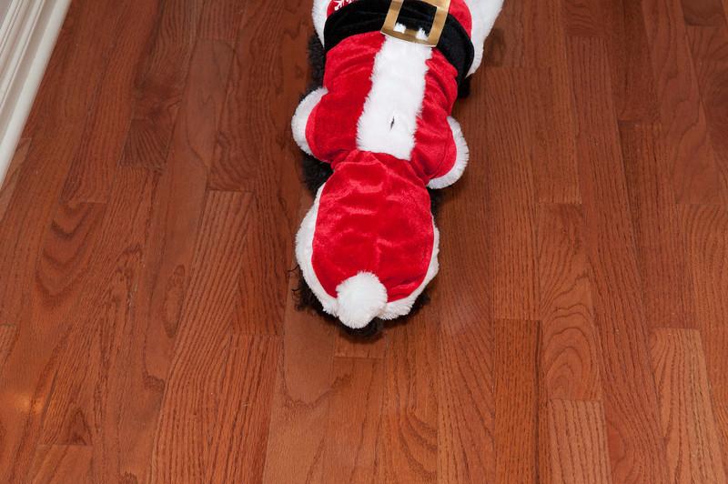 2012 Christmas-102.jpg