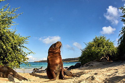 Galapagos 2018