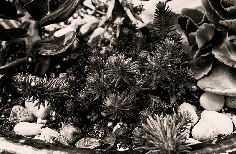 succulents 0704-2-2.jpg