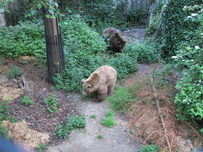 2 really big bears