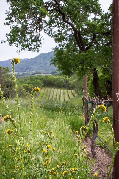 GlenLyon Spring Vines 2018
