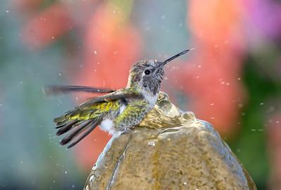 Hummingbirds (Advanced Setup)