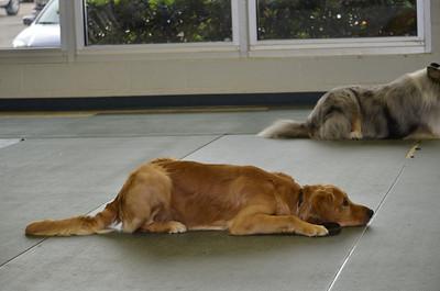 Lonnie & Donna Dog School