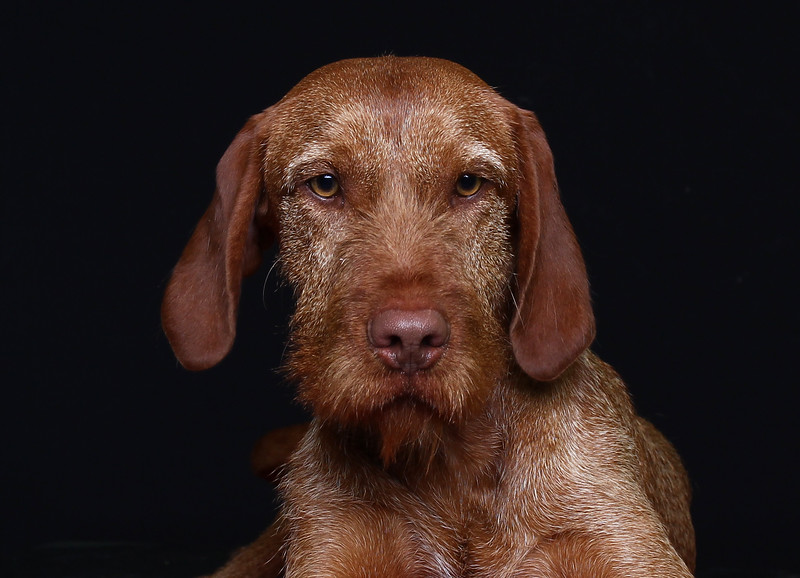 saule-dog-10.jpg
