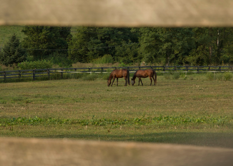 Same two mares, with zoom!