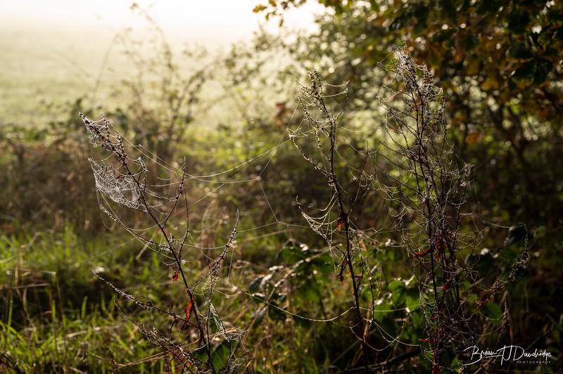 Hassocks in the mist-5378.jpg