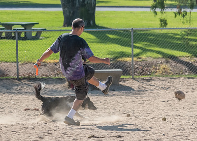 Dog Park, August 29 and 31.
