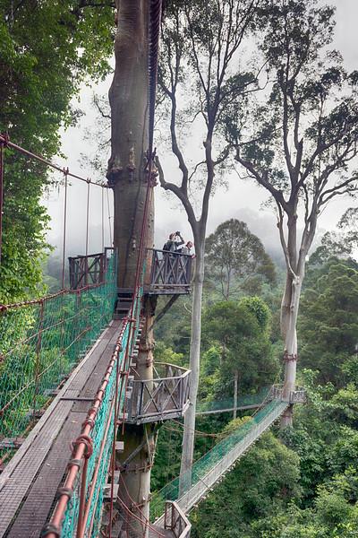 Borneo Rainforest Lodge 5-9-18132348.jpg