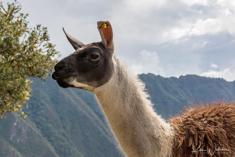 2018 Machu Picchu-85.jpg