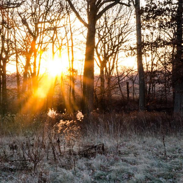 00807 Sunrise at FtSheridan Forest Preserve.jpg