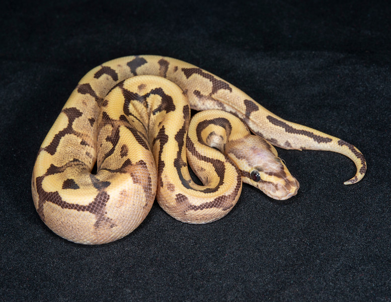 #2010, Male Vanilla Cream, $175