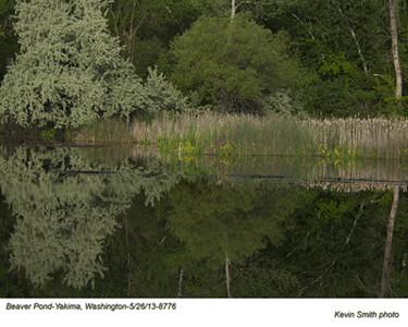 BeaverPond8776.jpg